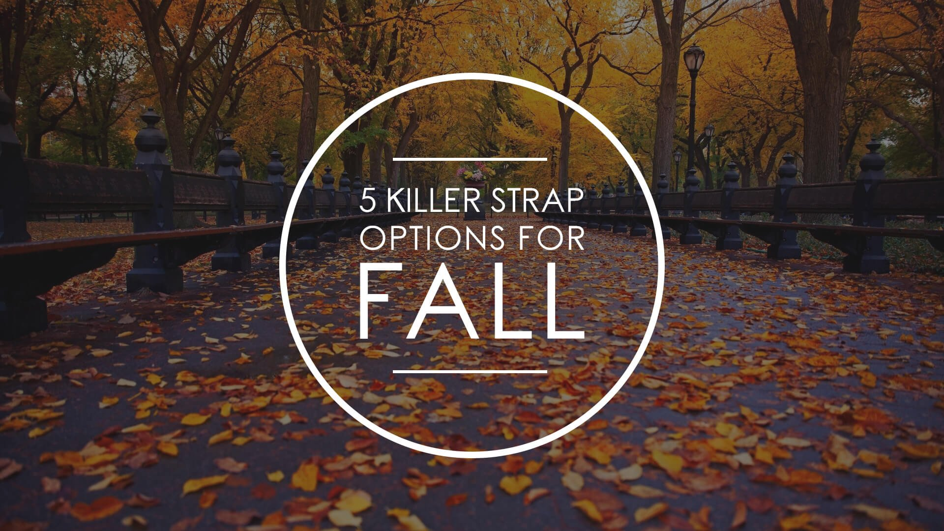 Watch 101: 5 Killer Strap Options for Fall